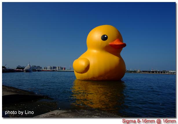 duck-012