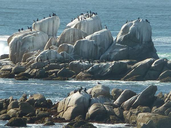 10408 礁岩上的海鳥