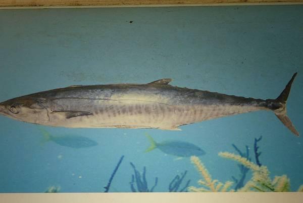 43501 645 土魠魚.JPG
