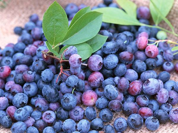 30025 010 Blue Berries.jpg