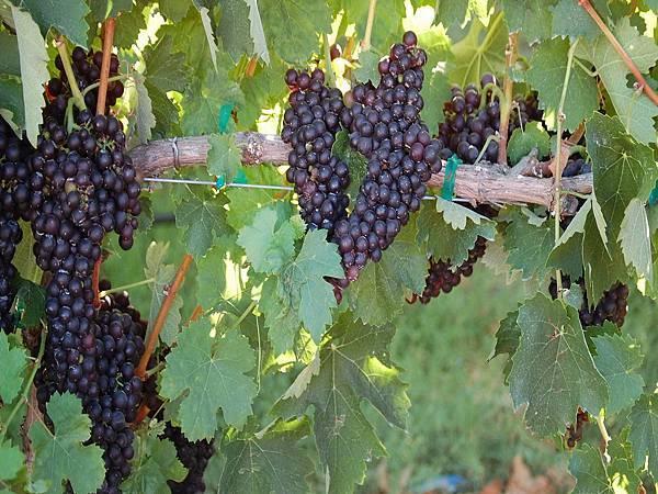 368 210 Vineyard on CA-12.jpg