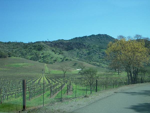357 305 Stags Leap winery.jpg