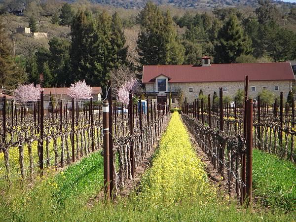 356 410 Silverado Trail.jpg