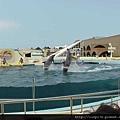 海洋公園-19