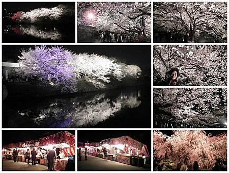 0325-舞鶴公園夜櫻
