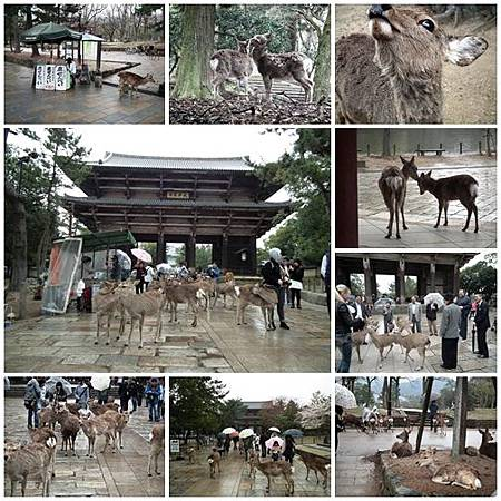 0328-Nara C