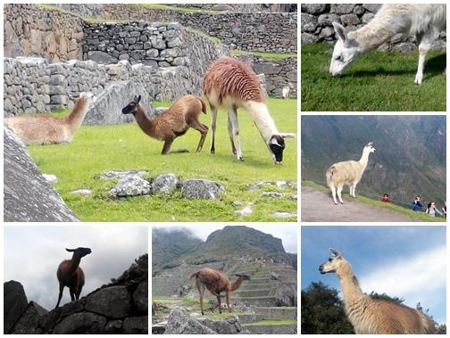 Peru-Machupichu04.jpg
