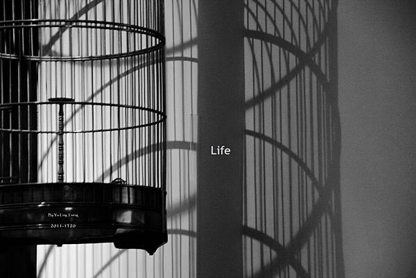 2011-1120 Life