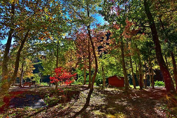美樹楓葉--22024.JPG