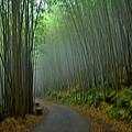 綠色隧道--34568.JPG