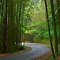 綠色隧道--34606.JPG