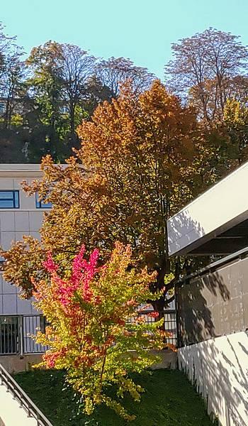 塞夫爾市街--A9110610~2.jpg