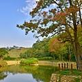 大埤塘楓--18143.JPG
