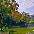 大埤塘楓--18154.JPG