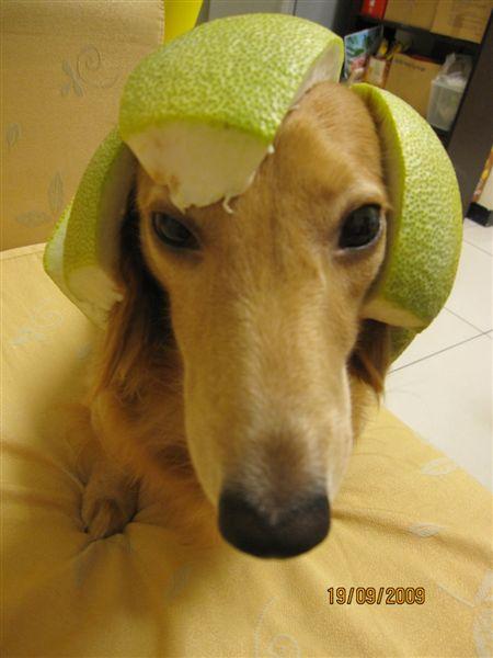 我有柚子帽.JPG