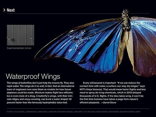 Waterproof wings