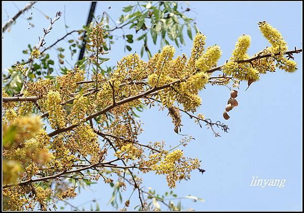 墨水樹20090303 (12)_調整大小.JPG
