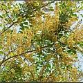 墨水樹20120315 (3)_調整大小.jpg