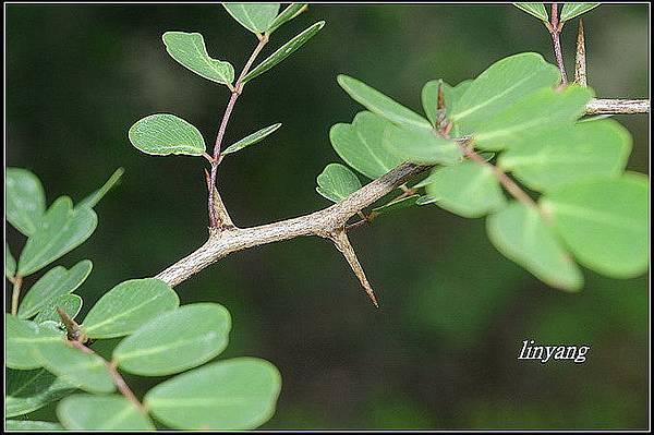 墨水樹 (1)