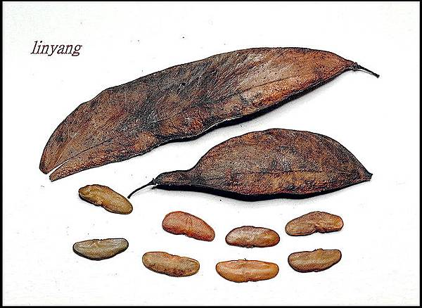 墨水樹 (2)