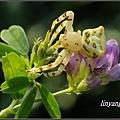 紫花苜蓿20131225 (1)_調整大小