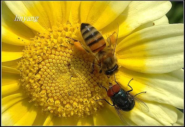 小蜜蜂 (5).jpg