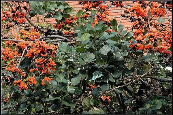 膠蟲樹 (2).jpg