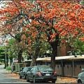 膠蟲樹 (12).JPG