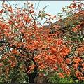 膠蟲樹 (13).JPG