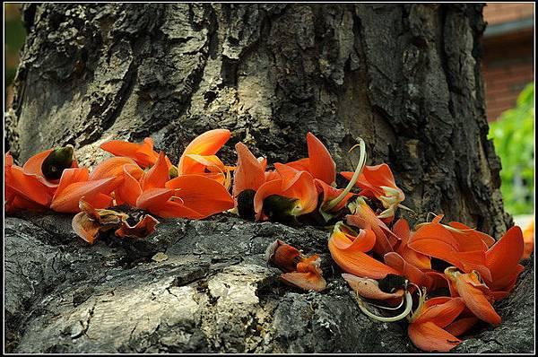 膠蟲樹 (23).jpg