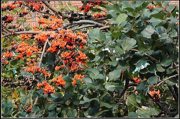 膠蟲樹20070330 (50)_調整大小