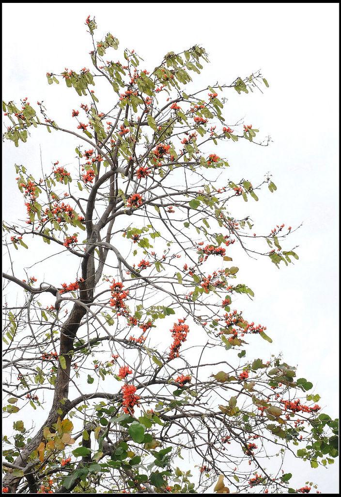 膠蟲樹20100520_調整大小