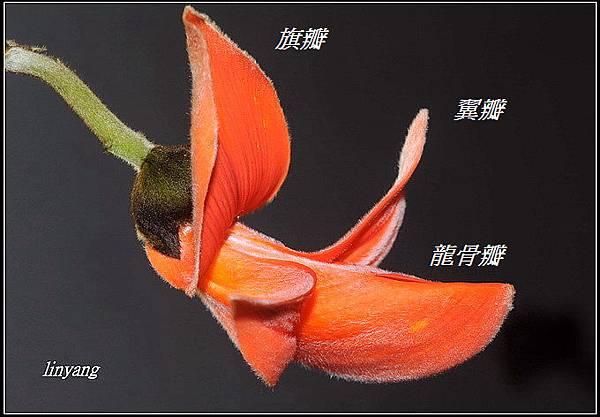 膠蟲樹 (10)