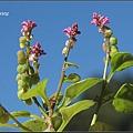 小扁豆20070701 (89)_調整大小.JPG
