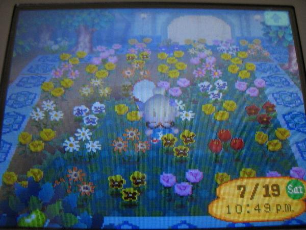 2008.09.01送花