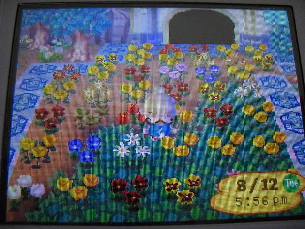 2008.10.23送花