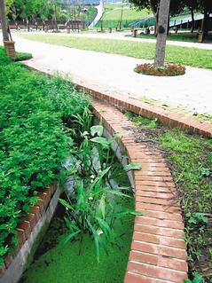 花博用水生植物淨水灌溉