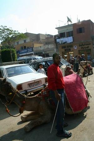 """駱駝與汽車""""pa""""在一起"""