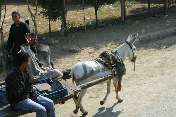 在搖擺的駱駝上隨手拍(1)