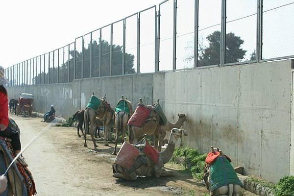 在搖擺的駱駝上隨手拍(2)