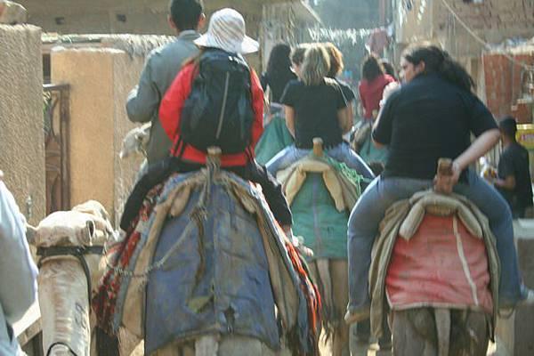 在搖擺的駱駝上隨手拍(3)
