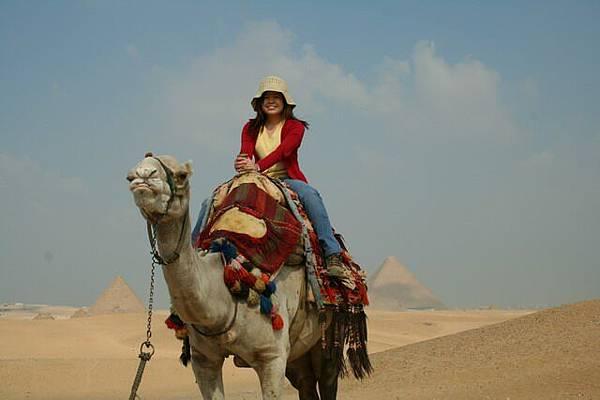 騎駱駝的英姿