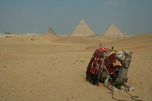 駱駝與金字塔