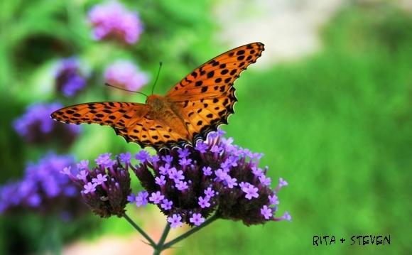 遇見蝴蝶採蜜