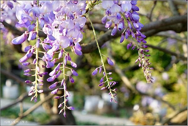 Purplevine01.jpg