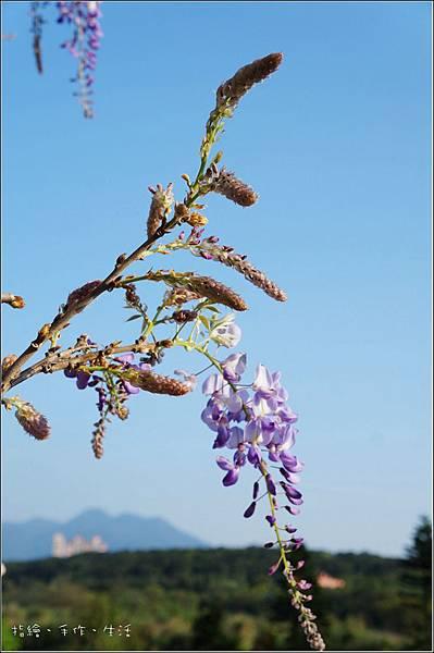 Purplevine12.jpg