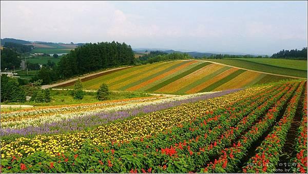 四季彩の丘12.jpg