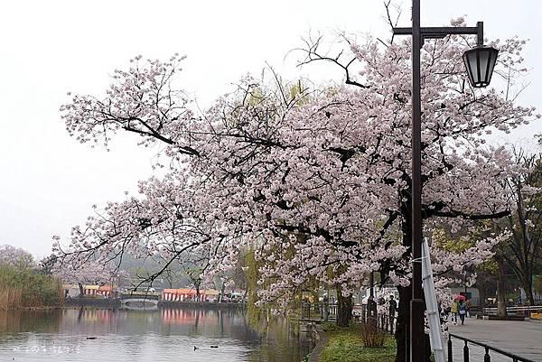 Uenopark06.jpg
