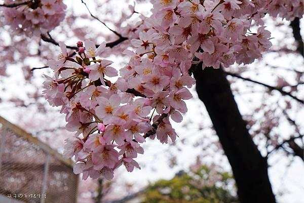 Uenopark11.jpg