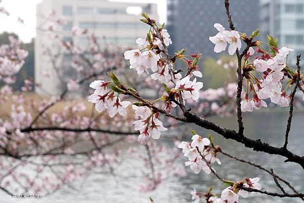 Uenopark12.jpg
